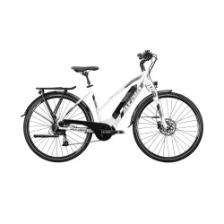 ATALA BUTTERFLY 24""